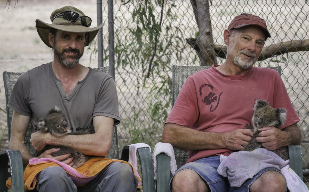 Glenn Cottier and Clive Bodle hold some of the many baby koalas that have been rescued.